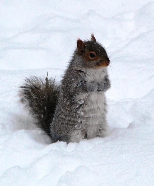 +0222 friend squirrels05.jpg