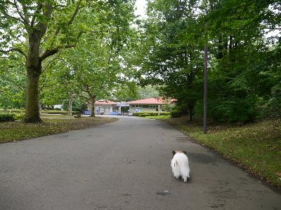 2012昭和記念公園3.JPG