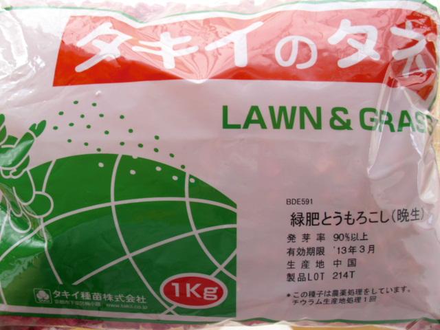 緑肥用とうもろこし20120606