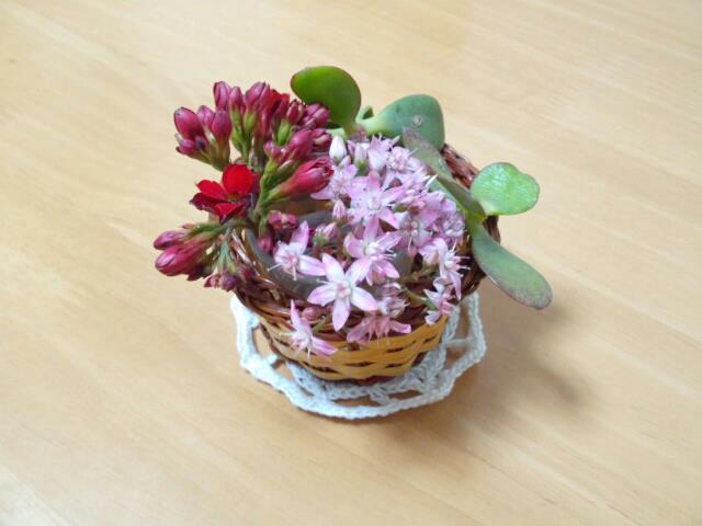 多肉植物の生け花