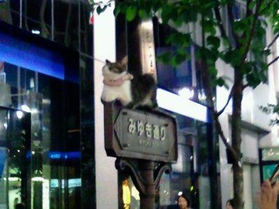 みゆき通りのネコ助02