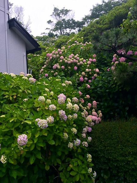 丹後ガ谷せみ公園.jpg
