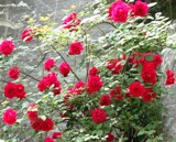 20120602 silgyecheon flower 8.jpg