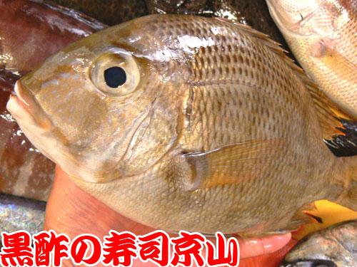 墨田区 寿司 出前 横川