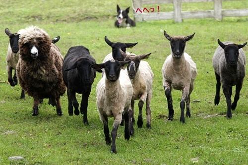 Sheepdog show BOYA FARM/シープドッグショー ボーヤファーム