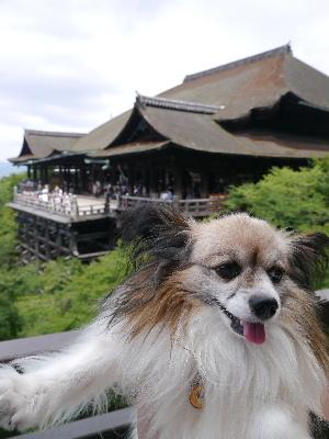 2012京都夏14.JPG