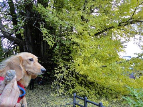 大きい木だね~