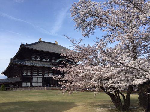 薬師寺と桜500.jpg