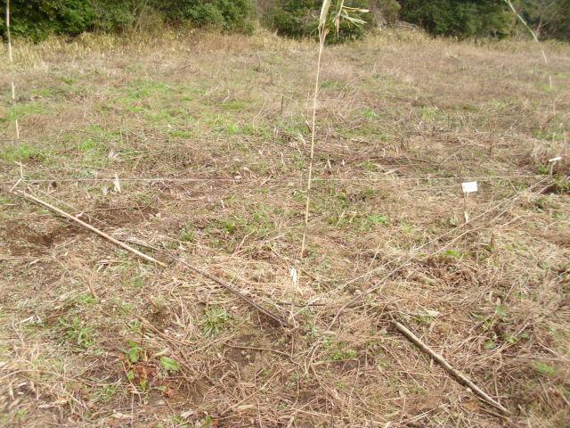 畑に直角を描く20120306
