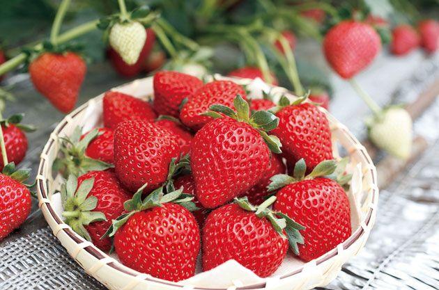 イチゴの画像 p1_34