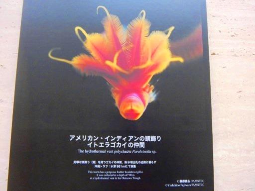 美しい深海の生物2.jpg