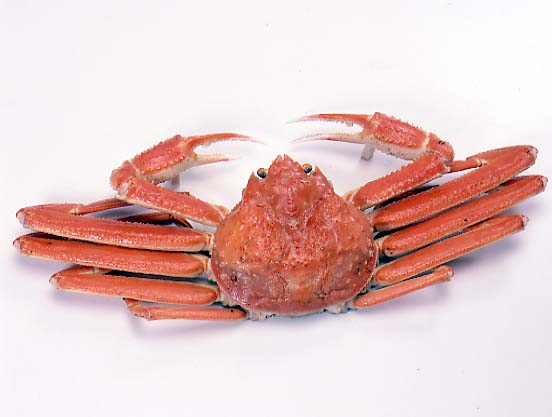松葉蟹ボイル