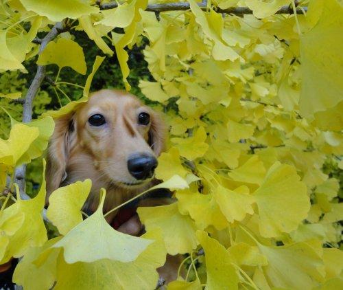 葉っぱばっかりだね~