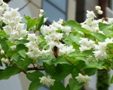 20120602 silgyecheon flower 4.jpg