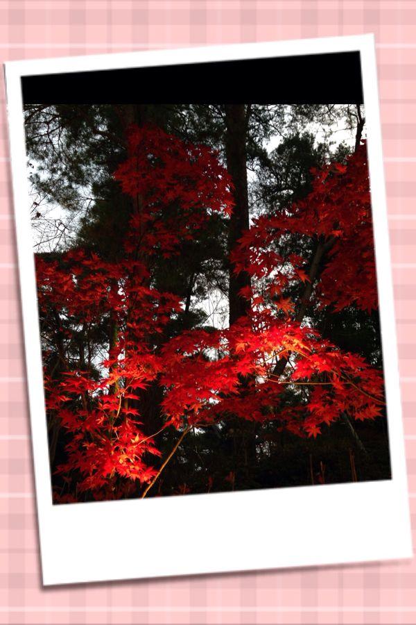 rblog-20141126214739-02.jpg