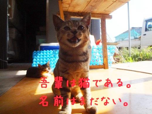 吾輩は猫である..jpg