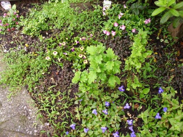 家の小さい庭20120701
