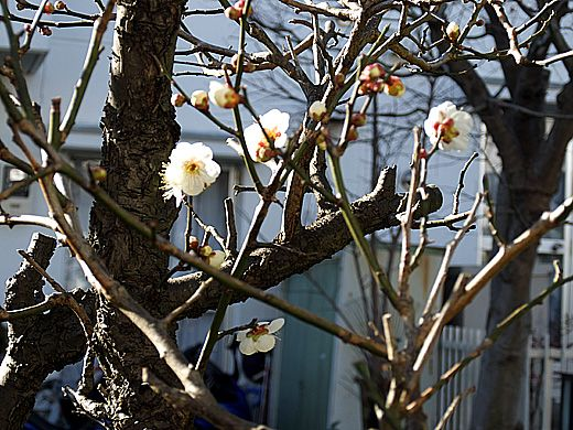 立 つけ し 春 ひ を や くらむ て こ 袖 むすび 風 と の 水 の ほれる ち ふ