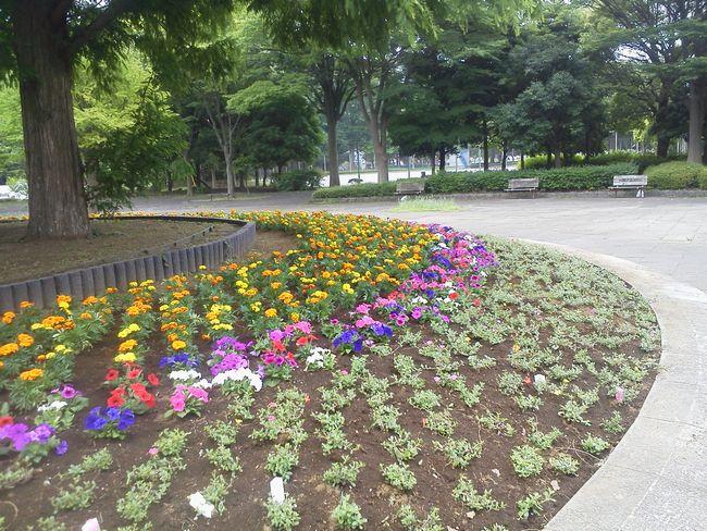 花壇の花.JPG
