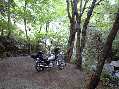 場 道志 天気 森 キャンプ の