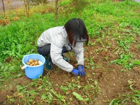 ジャガイモ植え.jpg