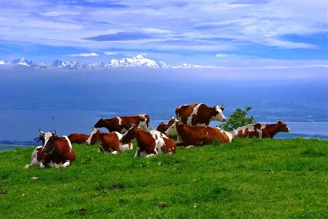 0722 cow hill.jpg