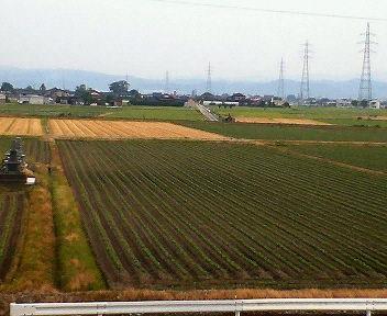 いつの間にやら小麦の刈り入れが終わったようです