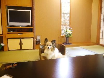 2012伊豆旅行5月2-4.JPG