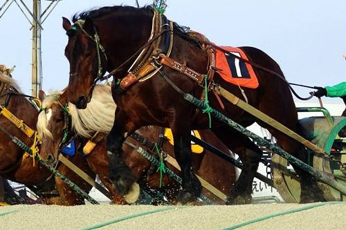 馬(ばんえい競馬)