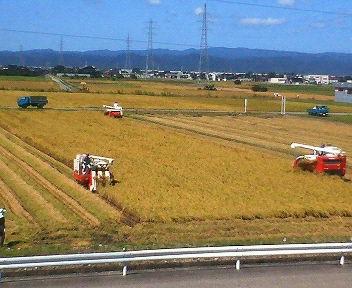 稲刈り_3.jpg