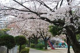 児童公園桜.png
