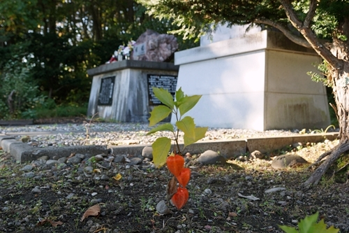 軍馬慰霊碑とホオズキ