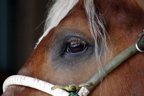 新燕-馬の瞳