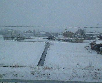 朝方から降りだした雪が瞬く間に積もりりました・・・。