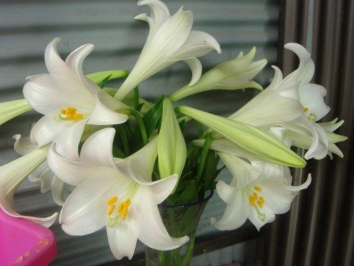 ユリの花が.jpg