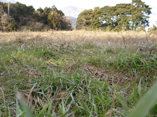 展望台そばの畑20120220