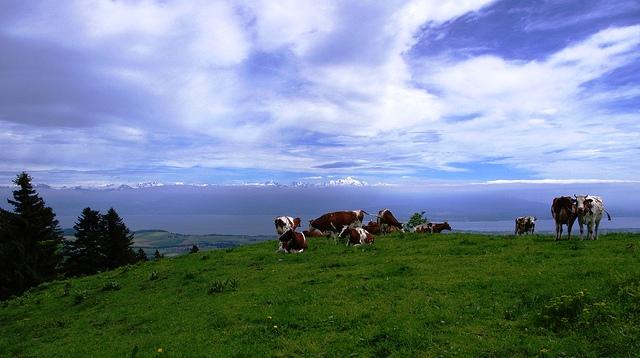 0722 cow hill01.jpg