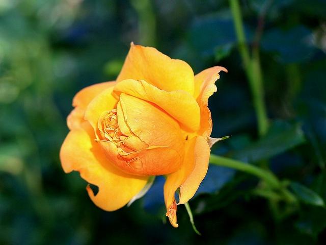0727 la fleur.jpg