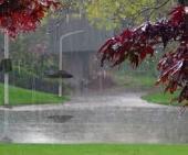 突然の雨。