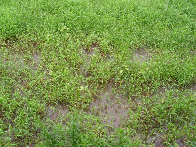 家の隣の畑20120627