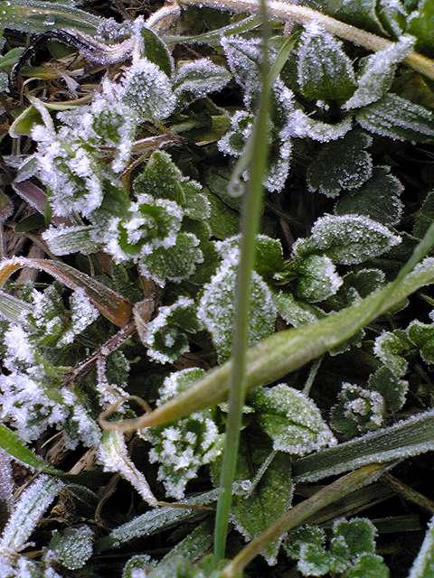 山の畑に霜20120227