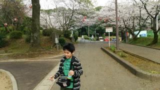 そら君と桜の写真
