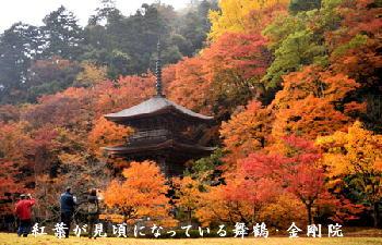 金剛院:「紅葉が見頃になっている」2016年.jpg