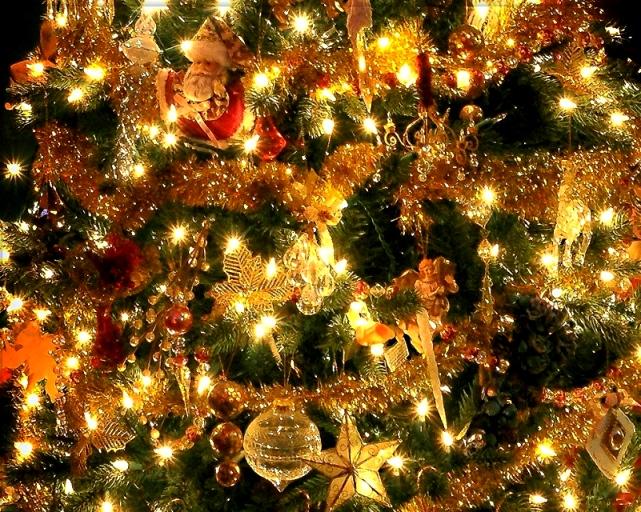 1124 Xmas tree.jpg