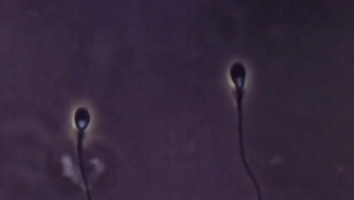 精子ロボット