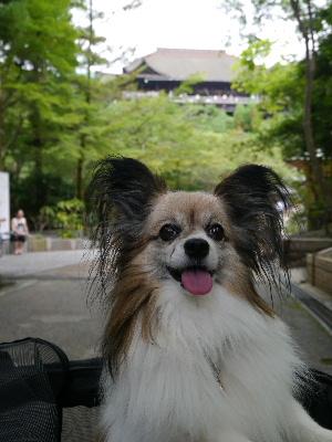 2012京都夏15.JPG