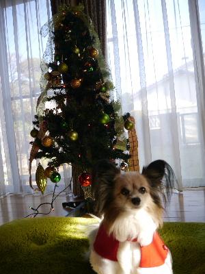 2012クリスマス3.JPG