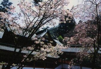 2014-03-sakura-kirijinn01