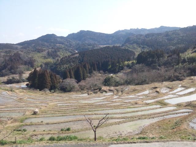 千枚田桜.JPG