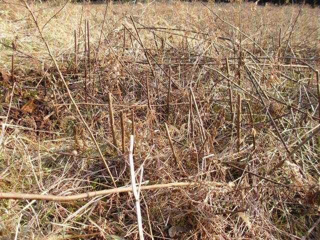 展望台そばの畑201202202